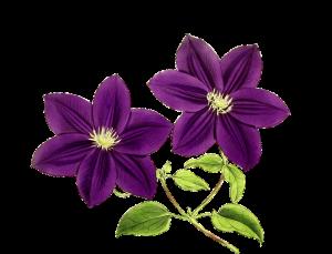 flower-1122590_960_720